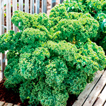 Keep Cropping Autumn Collection Veg