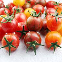 Tomato Plants - Artisan