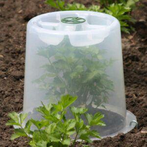 Mini Greenhouse Forcing Cloche