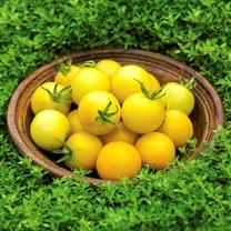Tomato Seeds - Honey Delight F1