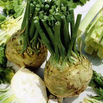 Celeriac Plants - Brilliant