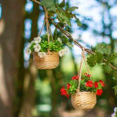 Smart Garden Blossom Basket Bouquets - 2 Pack