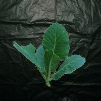 Biodegradable Garden Mulch 1.4 x 50m