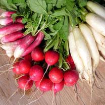 Radish (Organic) Seeds - Mixed