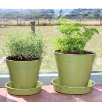 6 Bamboo Pot and Saucer - Sage Green (5 Pack)