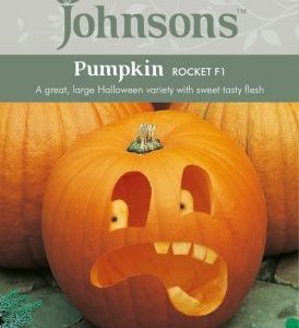 Johnsons Pumpkin Rocket F1 Seeds
