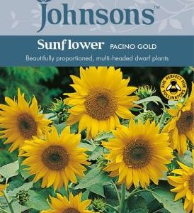 Johnsons Sunflower Pacino Gold Seeds