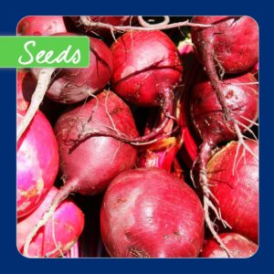 500 Beetroot Boltardy Seeds