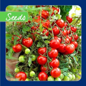 Tomato Tumbling Tom Red F1 20 Seeds