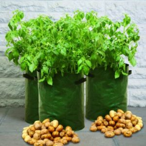 3 Pack of Patio Potato Planters