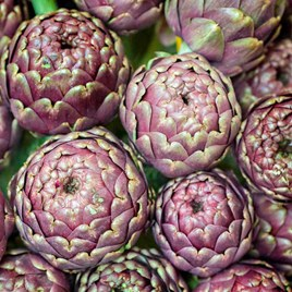 Artichoke Seeds - Purple de Provence
