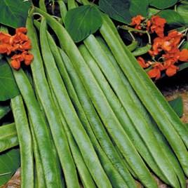 Bean (Runner) Seeds - Lady Di