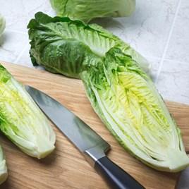 Lettuce Seeds - Xanadu