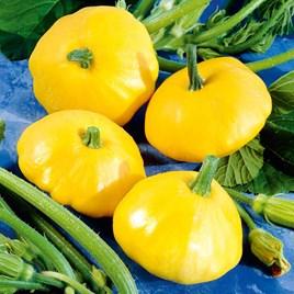 Squash Seeds - Sunburst Patty Pan
