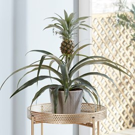 Houseplant Edible Pineapple
