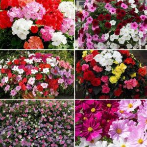 60 Garden Ready Named Collection