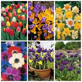 400 Spring Flowering Bulbs