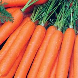 Carrot (Organic) Seeds - Resistafly F1
